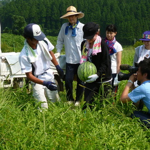 しらやま西瓜の収穫にいってきました